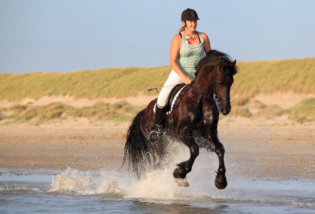 paardenfotografie-vakdesign