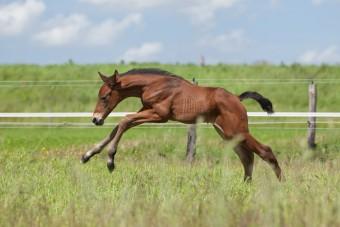 Paardenfotografie   Newborn