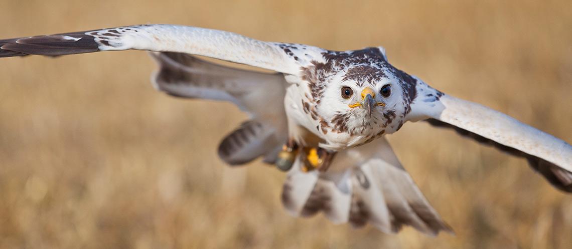 roofvogel-fotografie-vakdesign